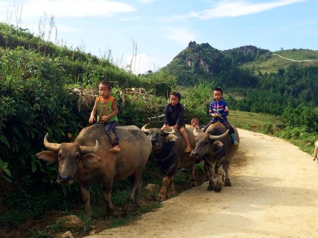 É comum vermos crianças cuidando dos animais e trabalhando com os pais nos arrozais